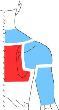 Упражнения при болях в среднегрудной части спины