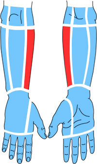 Упражнения при болях по лучевой стороне предплечья
