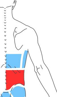 Упражнения при болях в в пояснице