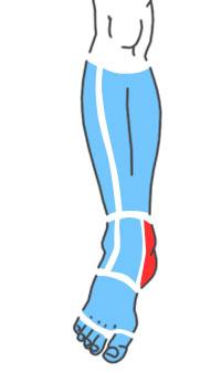 Упражнения при болях по внутренней стороне лодыжки